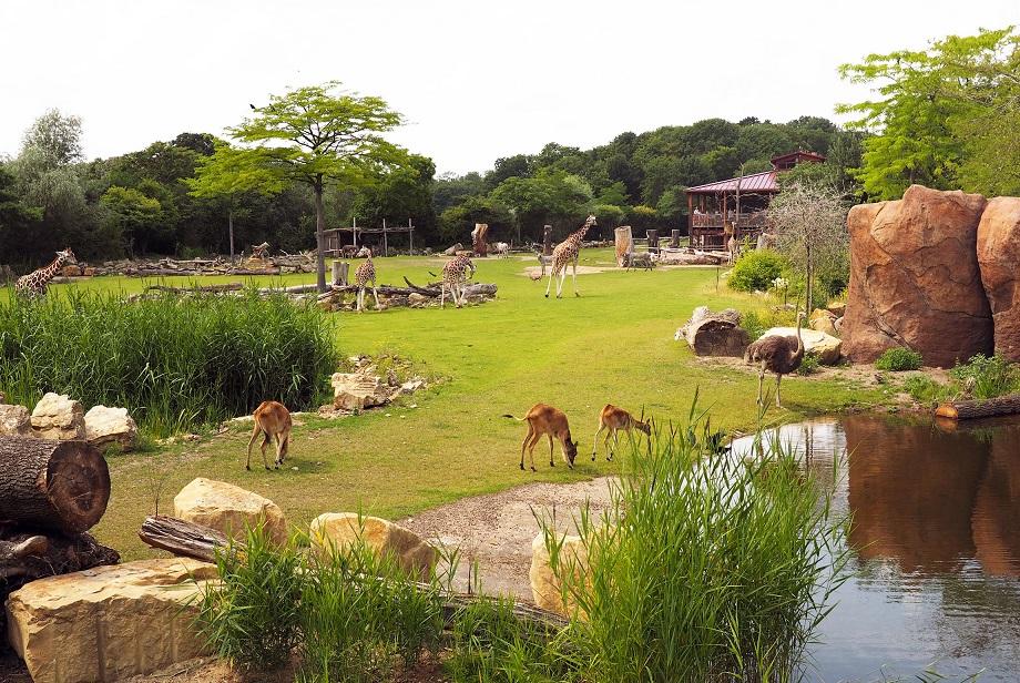 retrieved from: Zoo Leipzig