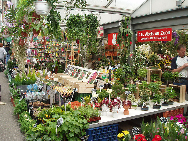 Bloemenmarkt Amsterdam (Retrieved from Flickr - ilaria)